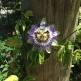 Yoga Garden beauti